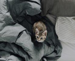 小柄な人向けのベッド