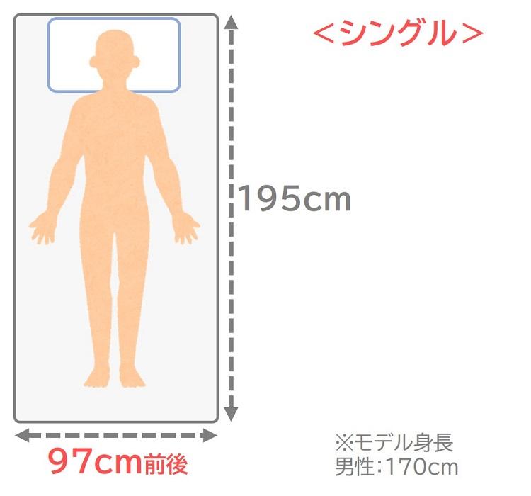 シングルサイズのサイズ感
