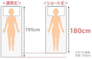 通常丈とショート丈の比較