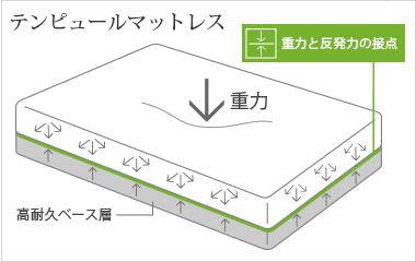 テンピュールの構造